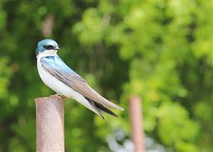 HK Bird