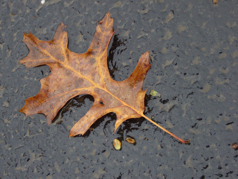Watershed Leaf